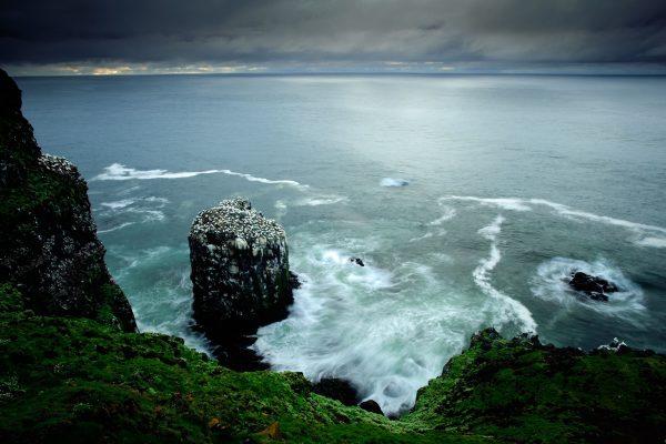 gannet_rock